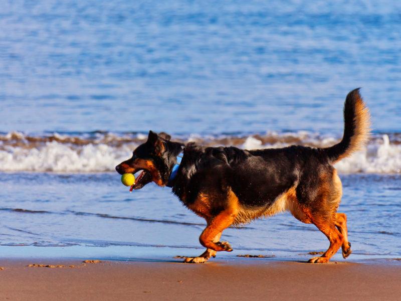 foto cabecera perros